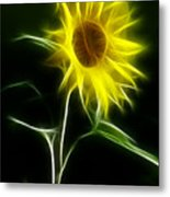 Sunflower Display Metal Print