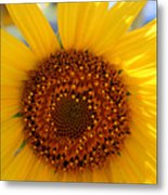 Sunflower Face Metal Print
