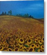 Sunflower Field 3 Metal Print