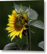 Sunflower Fractalius Beauty Metal Print