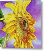 Sunflower Gold Metal Print