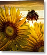 Sunflower Heaven Metal Print