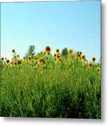 Sunflower Horizon Metal Print
