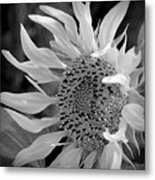 Sunflower In Contrast Metal Print