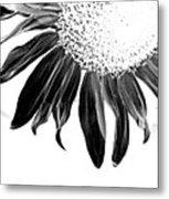 Sunflower In Corner Bw Threshold Metal Print