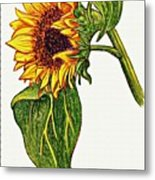 Sunflower In Gouache Metal Print