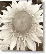 Sunflower In Soft Sepia Metal Print