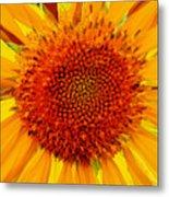 Sunflower In The Sun Metal Print