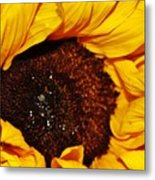 Sunflower In The Sun Metal Print