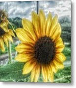 Sunflower In Town Metal Print