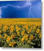 Sunflower Lightning Field  Metal Print