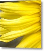 Sunflower Metal Print by Mary Van de Ven - Printscapes