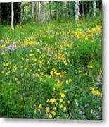 Sunflower Meadow Metal Print