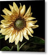 Sunflower Modified Metal Print