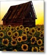 Sunflower Morning With Barn Metal Print