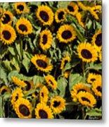 Sunflower Near Van Gogh Museum Metal Print