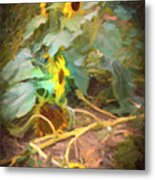 sunflower No. 9 Metal Print