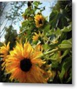 sunflower No.8 Metal Print