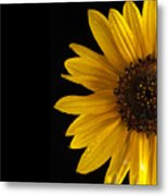 Sunflower Number 3 Metal Print