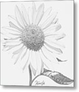 Sunflower  P Metal Print