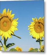 Sunflower Pair Metal Print