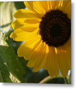 Sunflower Portrait With Leaf Metal Print