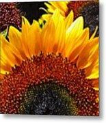 Sunflower Rise Metal Print