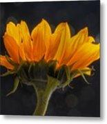 Sunflower Metal Print