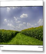 Sunflower Row Metal Print