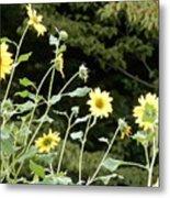 Sunflower Sea Of Happiness Metal Print
