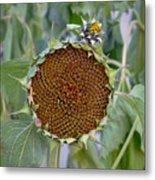 Sunflower Seedhead Metal Print