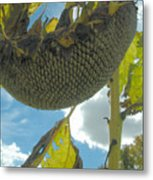 Sunflower Seeds Metal Print