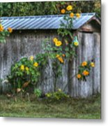 Sunflower Shed Metal Print