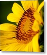 Sunflower Side Light Metal Print