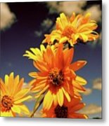 Sunflower Skies Metal Print