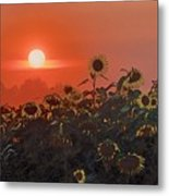 Sunflower Sundown Metal Print