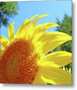 Sunflower Sunlit Art Print Canvas Sun Flowers Baslee Troutman Metal Print