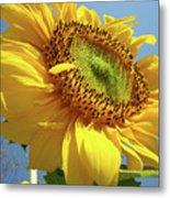Sunflower Sunlit Sun Flowers 6 Blue Sky Giclee Art Prints Baslee Troutman Metal Print
