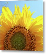 Sunflower Sunlit Sun Flowers Giclee Art Prints Baslee Troutman Metal Print