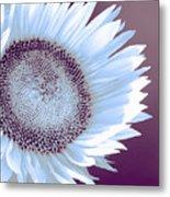 Sunflower Starlight Metal Print