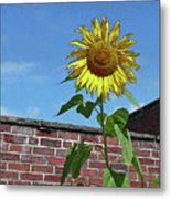 Sunflower With Brick Wall Poster Metal Print