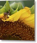 Sunflower With Grasshopper Metal Print