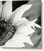 Sunflowers 16 Metal Print