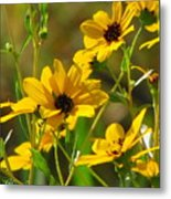 Sunflowers Along The Trail Metal Print