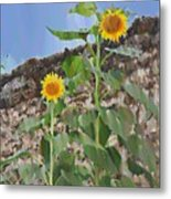 Sunflowers And A Stone Wall Metal Print