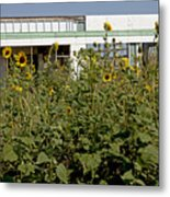 Sunflowers And Abandoned Gas Station Metal Print