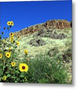 Sunflowers And Cliffs Metal Print