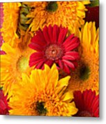 Sunflowers And Red Mums Metal Print