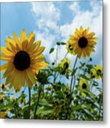 Sunflowers And The Bee Metal Print