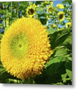 Sunflowers Art Prints Sun Flower Giclee Prints Baslee Troutman Metal Print